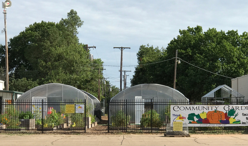 Wide shot of Think Ability Community Garden